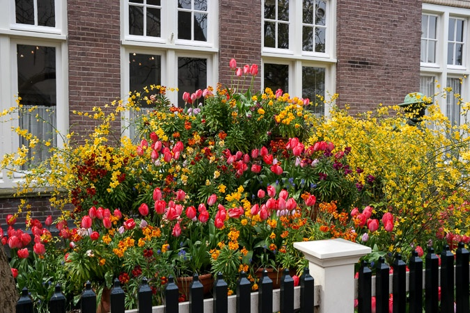 tulips in a garden at Beguinage Amsterdam