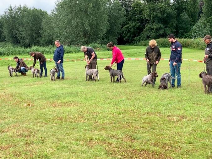 Club day dogs Korthals Griffon