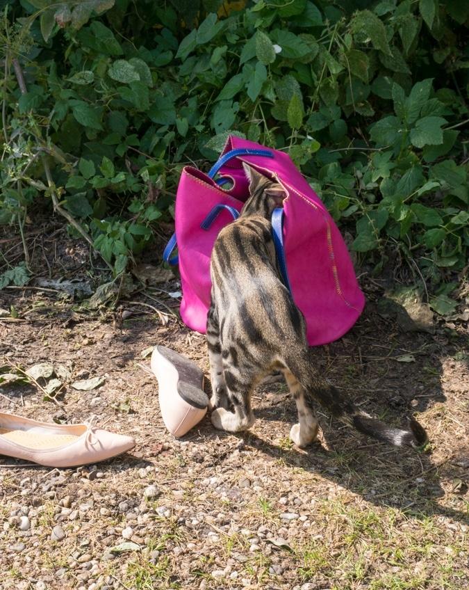 Pretty cat nodding in bag
