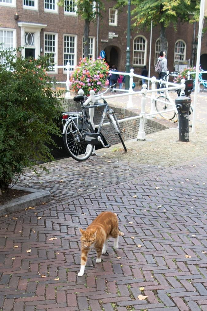 Delft cat
