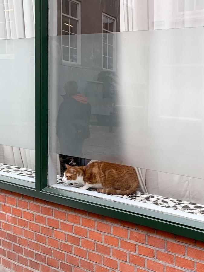 cat in Dordrecht
