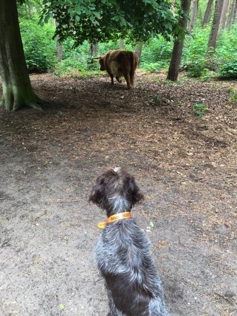 Watson and the Scottish highlander