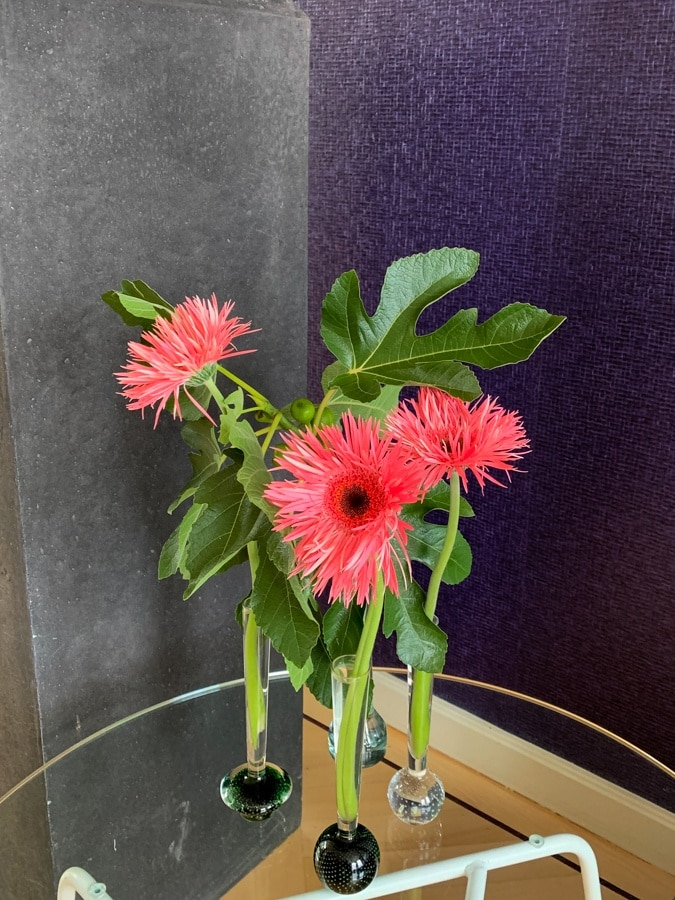 Orange pink gerberas with fig tree branches