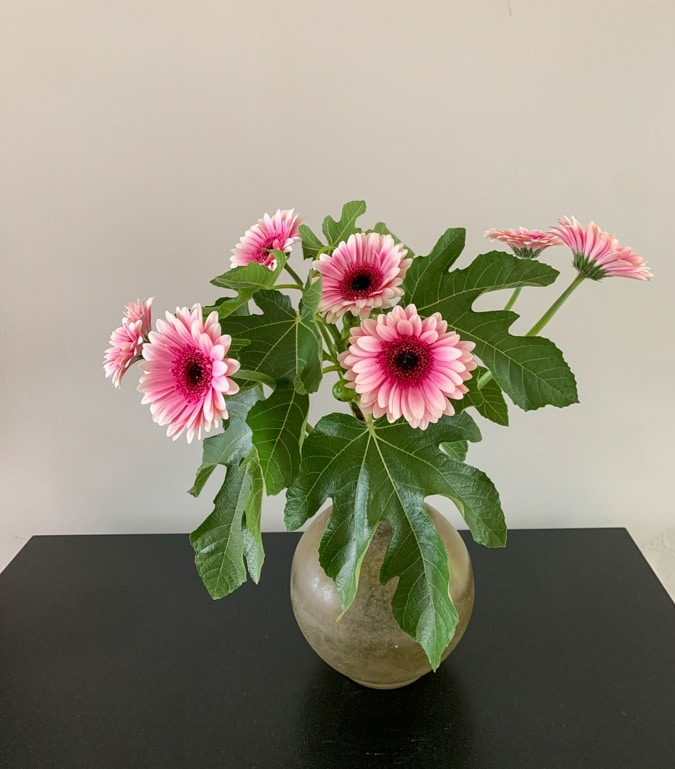 Pink gerberas bouquet with fig tree branches