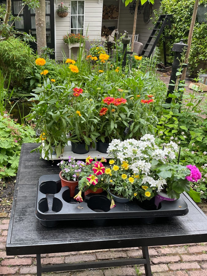 new plants for the garden
